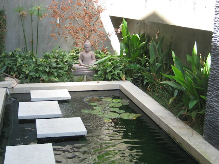 Restoring Muddy Garden Pond Water